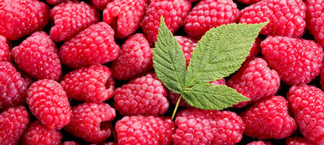 Fresh raspberries with leaves as background. Top view Stock Photo