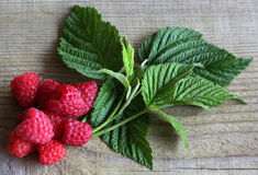 Fresh raspberries with leaves as background,. Top view Stock Photos