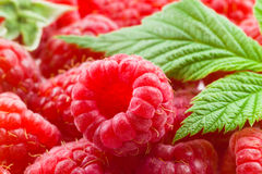 Fresh raspberries Stock Images
