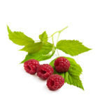 Fresh raspberries. With leaves  on a white background Stock Photo