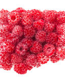 Fresh raspberries in mineral water. Fresh raspberries covered in mineral water bubbles Royalty Free Stock Photo