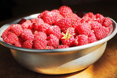Fresh raspberries. In the old aluminum dish in sunlight Stock Image