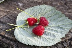 Fresh raspberries on raspberry leaf. And wooden background close up Royalty Free Stock Photos