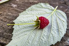 Fresh raspberries on raspberry leaf. And wooden background close up Stock Photo