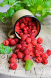 Fresh raspberries scattered from metal mug. On wooden rustic table and mint Stock Image