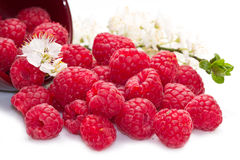 Fresh raspberries scattered. On white background Stock Photos