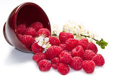 Fresh raspberries. Scattered on white background Stock Images
