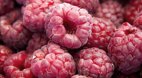 Fresh raspberries. Fresh and tasty raspberries fruits is ready to serve Stock Images