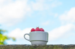 Fresh raspberries in white cup. On wooden rustic table. Copy-space composition Royalty Free Stock Photography