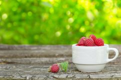 Fresh raspberries in white cup. On wooden rustic table. Copy-space composition Stock Photos