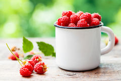 Fresh raspberries in white enamelled mug on table. Outdoors Stock Images