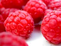 Fresh raspberries on white plate. A detailed study of fresh raspberries Stock Images