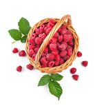 Fresh raspberries in wicker basket with green leaves. On white background Royalty Free Stock Image