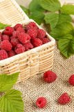 Fresh raspberries in a wicker box and honey, green leaves.  Stock Photography