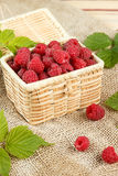 Fresh raspberries in a wicker box and honey, green leaves Royalty Free Stock Image