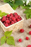 Fresh raspberries in a wicker box and honey, green leaves.  Royalty Free Stock Photography