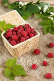 Fresh raspberries in a wicker box and honey, green leaves Royalty Free Stock Photography