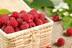 Fresh raspberries in a wicker box and honey, green leaves Royalty Free Stock Images