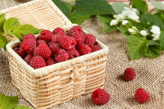 Fresh raspberries in a wicker box and honey, green leaves.  Royalty Free Stock Photos