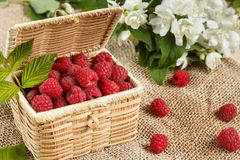 Fresh raspberries in a wicker box and honey, green leaves.  Royalty Free Stock Images