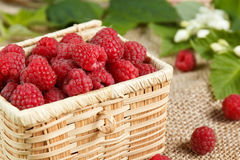 Fresh raspberries in a wicker box and honey, green leaves.  Stock Image