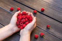 Fresh raspberries in woman's hands on wood background. Handful of fresh raspberries in woman's hands on brown rustic wood background. Harvest of healthy food Royalty Free Stock Photo