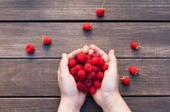 Fresh raspberries in woman`s hands on wood background Stock Photography