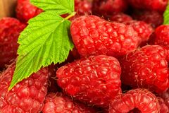 Fresh raspberries on a wooden table. Forest fruit. Healthy food. Sale of raspberries. Fresh raspberries on a wooden table. Forest fruit. Healthy food. Sale of Royalty Free Stock Image