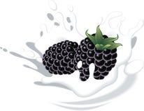 Raspberries in yougurt or milk Stock Image