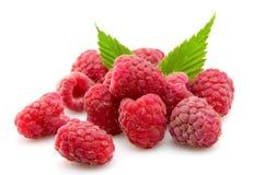 Fresh raspberry Royalty Free Stock Photos