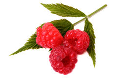 Fresh raspberry. And leaf isolated on a white background Stock Images