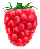 Fresh raspberry. Illustration isolated with  clipping path Stock Photos