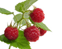 Free Fresh Raspberry Royalty Free Stock Image - 25458796