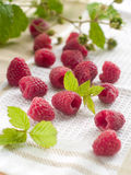 Fresh raspberry. On light background, selective focus Royalty Free Stock Photography