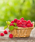 Fresh raspberry. In the basket Stock Photo
