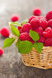Fresh raspberry. In the basket Royalty Free Stock Photo