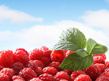 Fresh raspberry against sky Stock Images