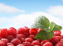 Fresh raspberry against sky. Fresh red raspberry against sky Stock Images