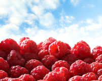 Fresh raspberry against sky Stock Photography