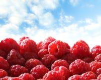 Fresh raspberry against sky. Fresh red raspberry against sky Stock Photography