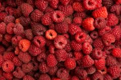 Fresh raspberry. As a background Stock Image