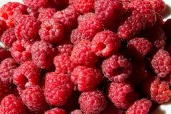 Fresh Raspberry as a background. Closeup photo Royalty Free Stock Photo