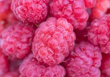 Fresh raspberry background. A Red fresh raspberry background Royalty Free Stock Images