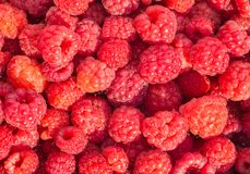 Fresh raspberry background. A Red fresh raspberry background Royalty Free Stock Image