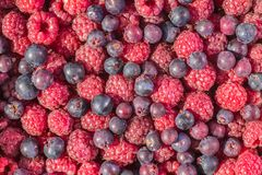 Fresh raspberry background. A Red fresh raspberry background Stock Images