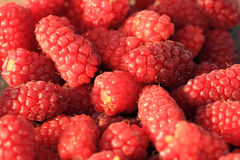 Fresh raspberry background. Fresh red raspberry as nice fruit background Stock Photos