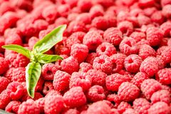 Fresh raspberry and basil background closeup photo.Top view..Det. Ox diet food and raw vegan concept Stock Image