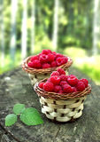 Fresh raspberry. In a basket Royalty Free Stock Photography