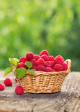 Fresh raspberry. In the basket Royalty Free Stock Image