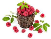 Fresh raspberry in a basket. Raspberries in the basket on white Stock Images